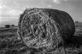 St Bees Head, Hay Bails. 2.
