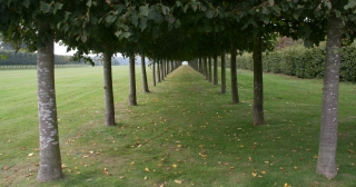 Tree Avenue, Houghton Hall, Norfolk, '15.