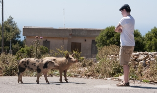 Pigs and Rob, Greece, '16.