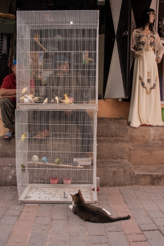 Cat and Canaries, Azrou, Morocco, '17.
