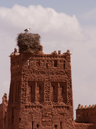Storks nesting on old Kasbah, Morocco, '17.