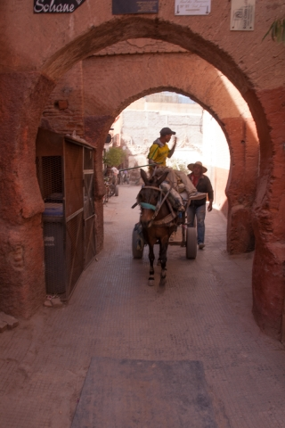 Working Donkey, Souk, Marrakesh, '17.
