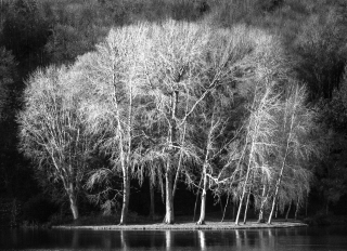 Silver Birches, Stourhead, '19.
