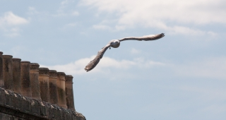 Young Gull, [Covid 19 photo's], Bath, '20.