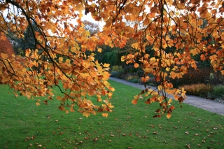 Autumn, Bath Botanical Gardens.