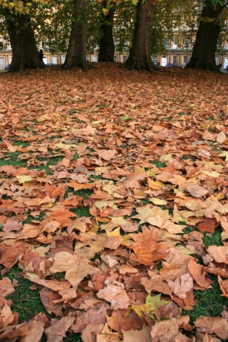 Autumn Leaves, The Circus, Bath.
