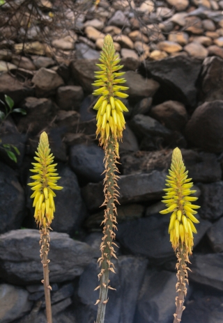 Unknown Plant, La Gomera, '14.