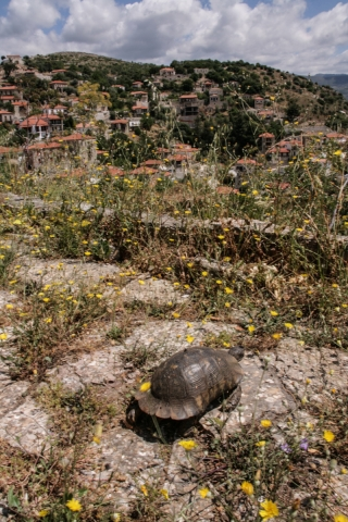 Tortoise, Karitena, Greece, '00.