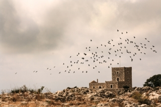 Crows, Ariopoli, Greece, '10.