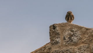 Owl, Greece, '10.