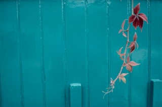 Garage/Virginia Creeper, London.
