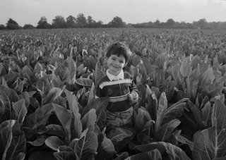 Rob in Cabbage Field.