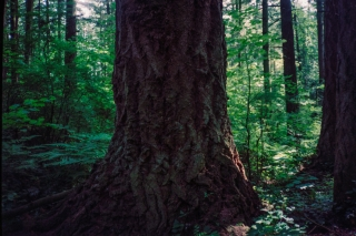 Forest, Nr Vancouver, Canada.