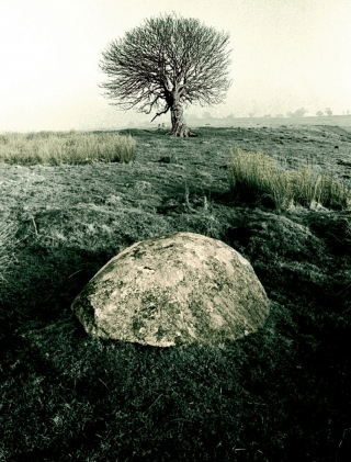 Stone/Tree, [B&W]Toned, Cumbria.