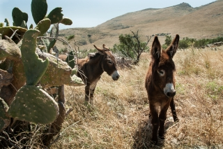 Mani Peninsula, Donkeys, '16.