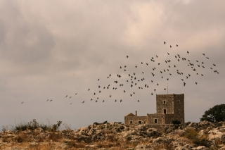 Areopoli, Tower House and Crows, '10.